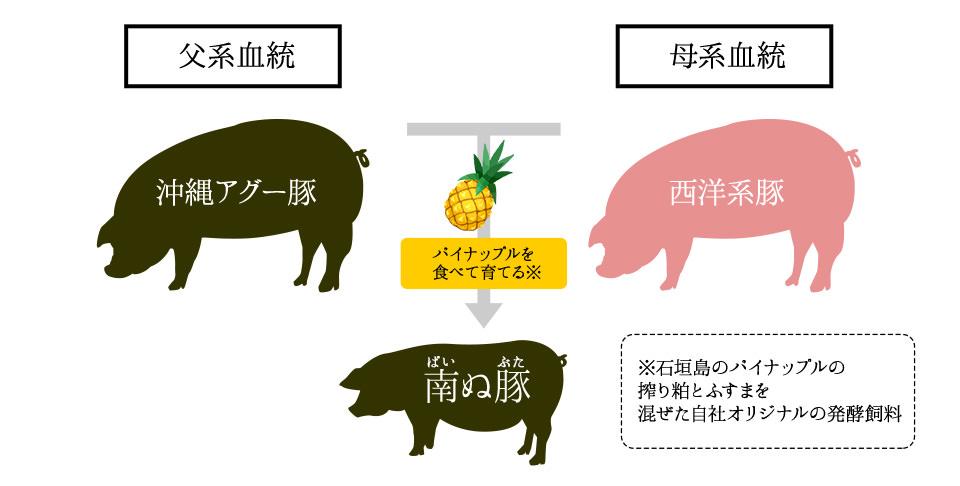 沖縄アグー豚と西洋系豚の掛け合わせが南ぬ豚