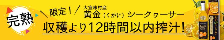 ☆期間限定☆贅熟 黄金シークワーサージュース(12時間以内搾汁)