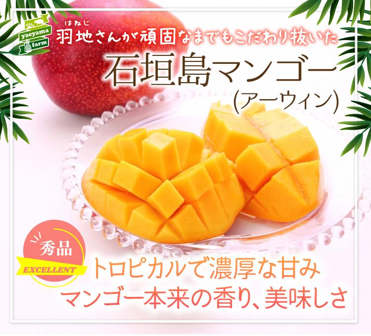 石垣島産マンゴー&パイナップルスペシャルセット