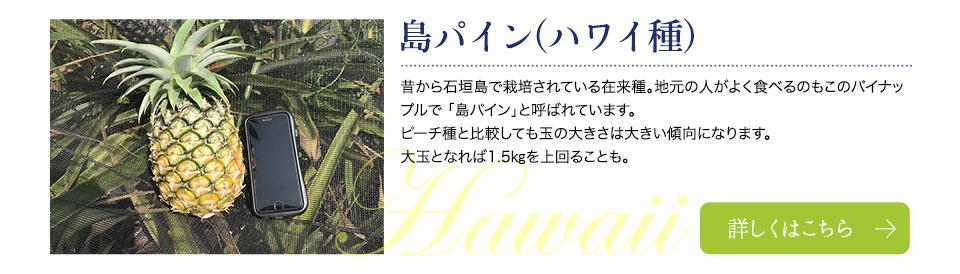 島パイン(ハワイ種)
