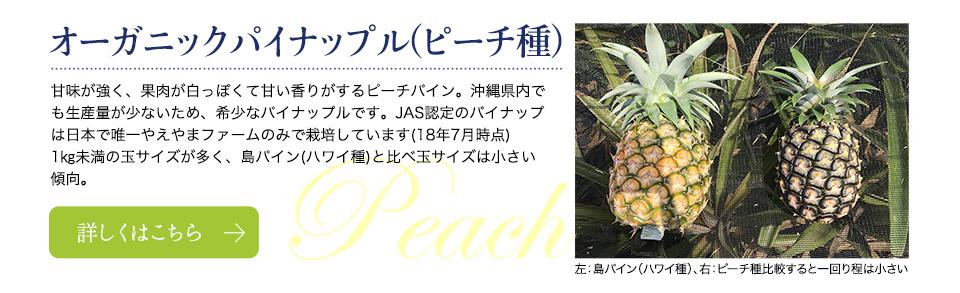 オーガニックパイナップル(ピーチ種)